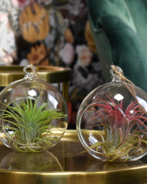 airplant-in-glassball.jpg